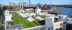 Brooklyn Grange, Brooklyn, NY grows produce on 2.5 acres of commercial rooftop space